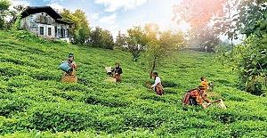 Rize dışındaki çay üreticileri kente gelmeye devam ediyor